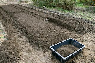 ノイバラ台木の苗床を作る