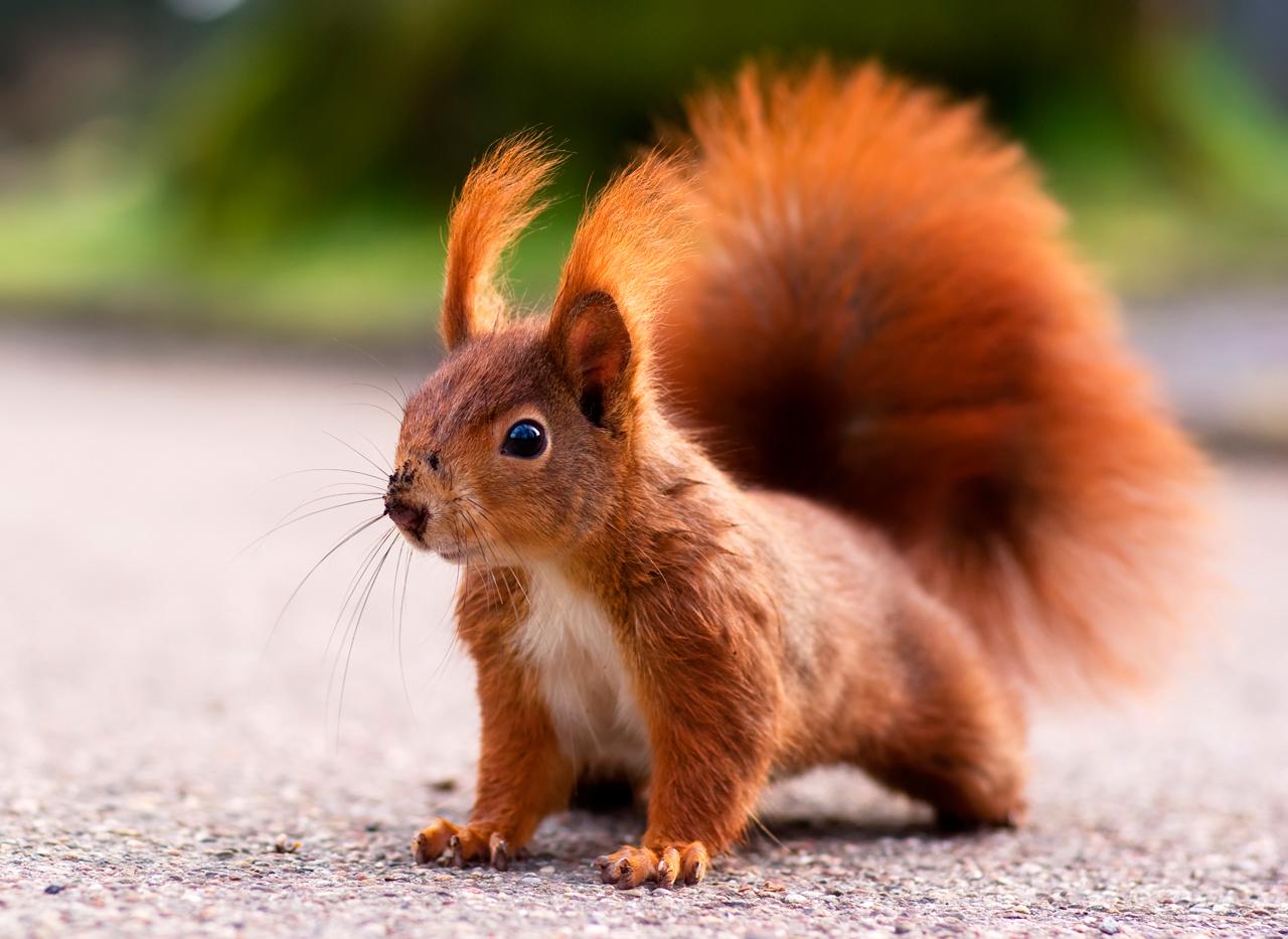 Eichhörnchen Bilder