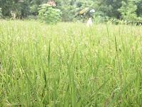 Potensi Alam yang Dimiliki Desa Muarah