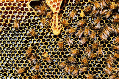 Bee Hive - Bees Making Honey