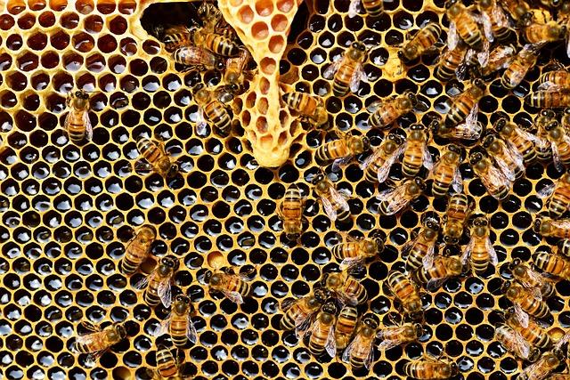 Bee Hive - Bees Making Honey