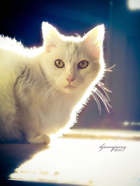 White Cat with Back lighting