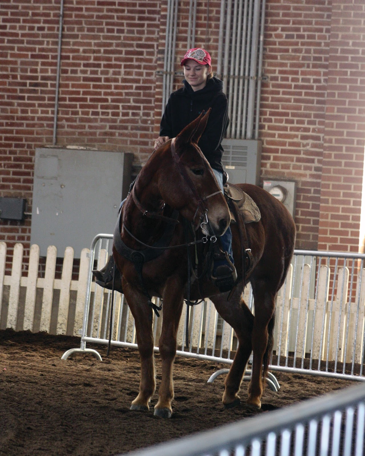 Mules and More Magazine: Illinois Horse Fair