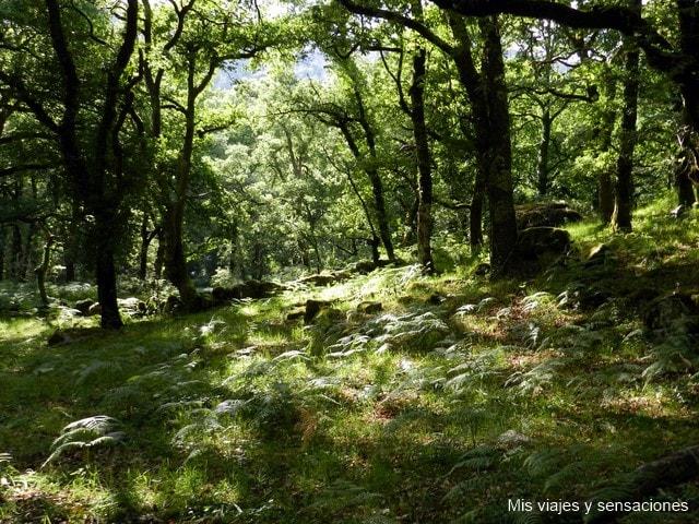 Mata de Albergaria, Parque Nacional de Peneda-Gerés