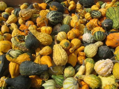 Fall Pumpkin STEM Project