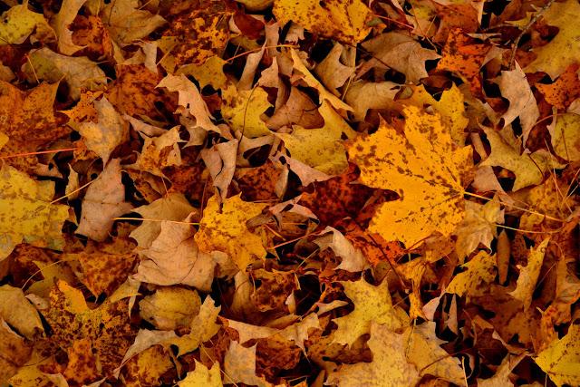 Осінь у Вермонті (Vermont Fall Foliage)