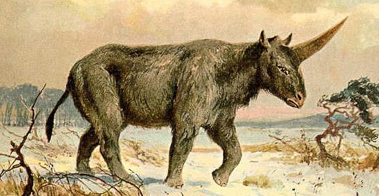 Elasmotherium sibiricum