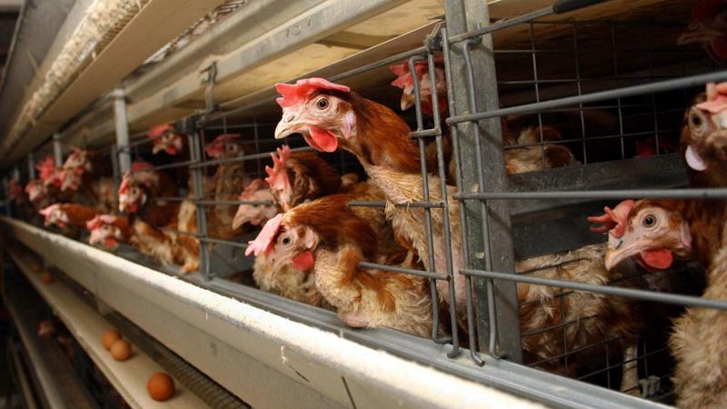Κρούσμα γρίπης των πτηνών στη Ροδόπη