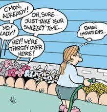 gardening humor, flowers joke, impatien flowers, impatient flowers, garden comic