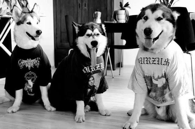 Perros Black Metal