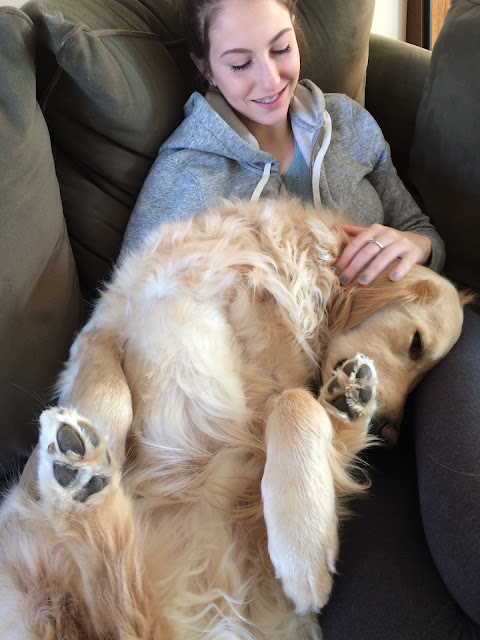 cute golden retriever dog sitting on owner's lap #wordlesswednesday