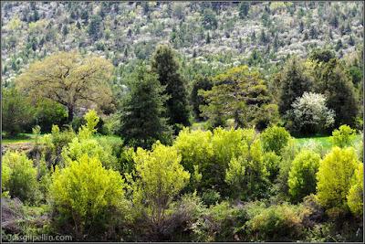 Vegetación variada en Torres De Albarracín