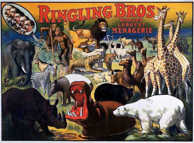 "This 1909 poster advertises the Ringling Bros. circus as having the ""world's largest menagerie"".  The illustration features profile portraits of the five Ringling Brothers (at upper left), (AL FENN/THE LIFE IMAGES COLLECTION/GETTY)"