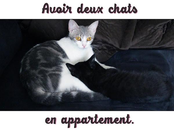 Deux chats en appartement.