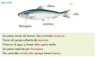 http://primerodecarlos.com/SEGUNDO_PRIMARIA/tengo_todo_4/root_globalizado4/libro/6169/ISBN_9788467808803/activity/U04_154_01_AIn/visor.swf
