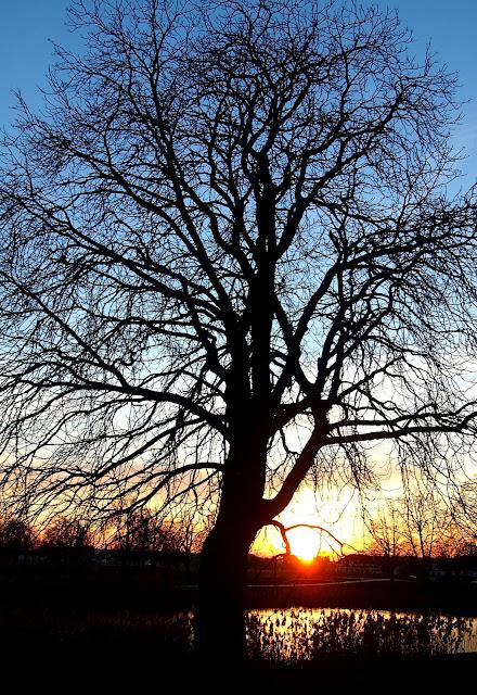 Drzewo w zachodzącym słońcu.