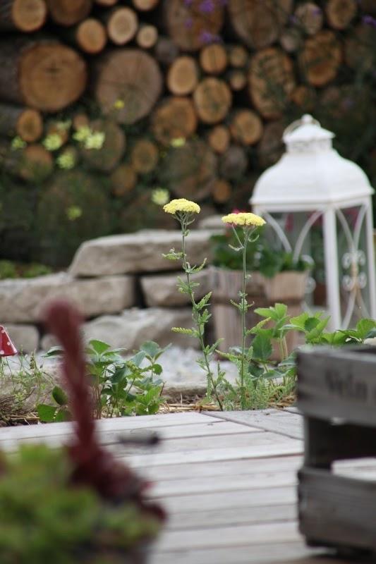 DoMis Garten Blickachsen  der Garten im Juni
