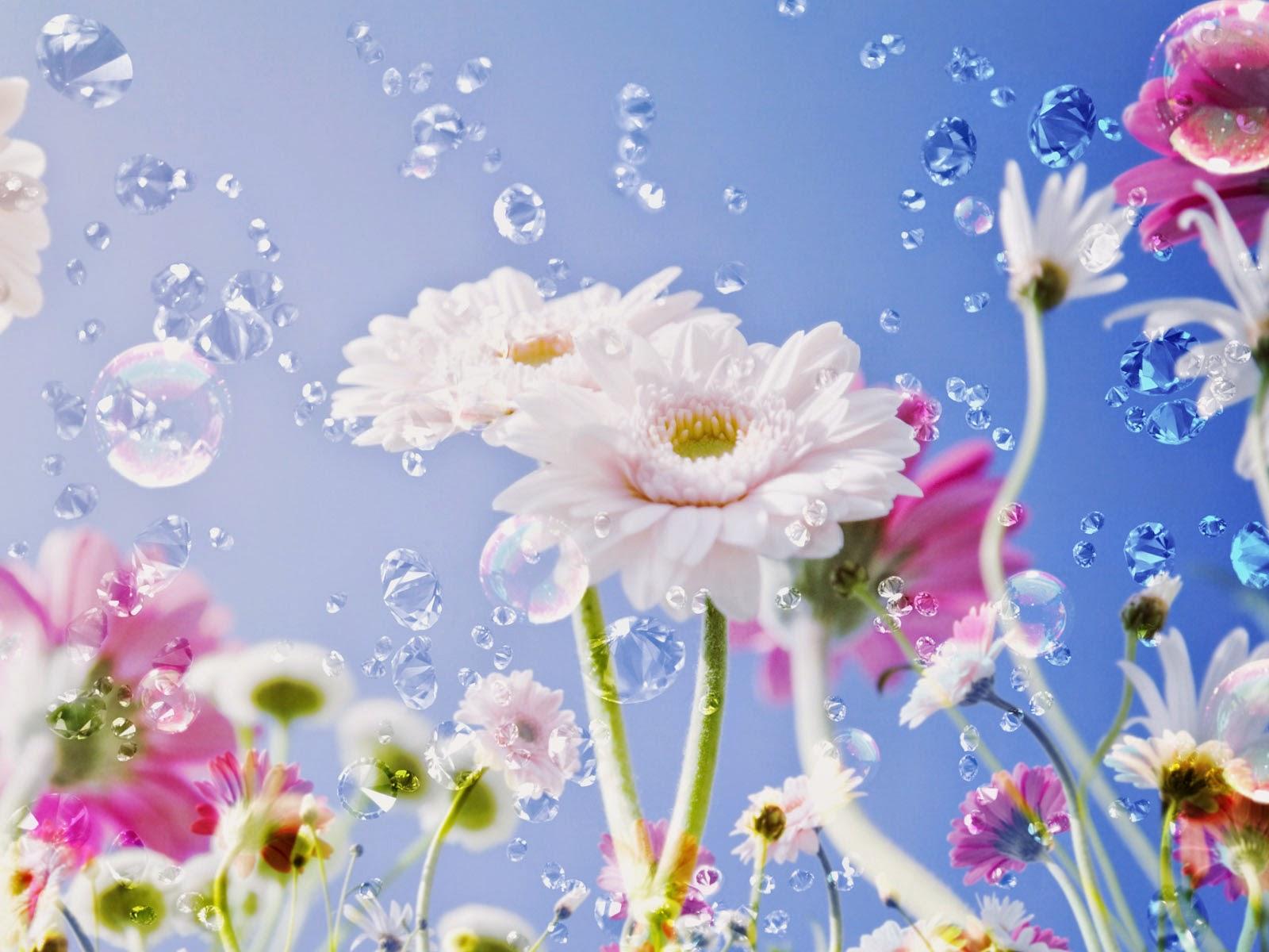Beautiful Flowers HD Poze rase