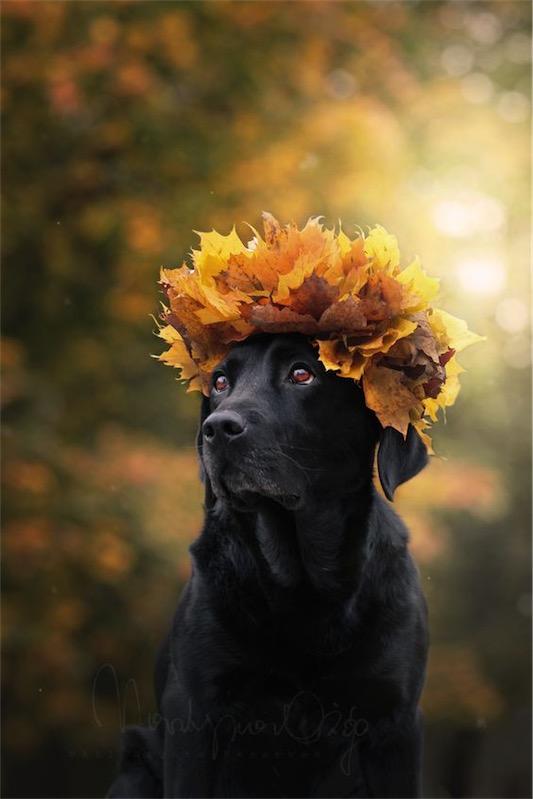 Domingo de otoño chicanddeco