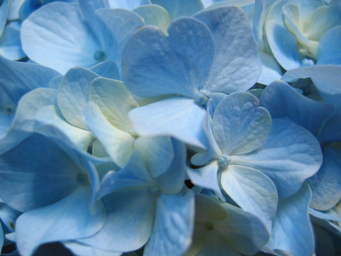 Flowers Background Wallpapers Flower Backgrounds