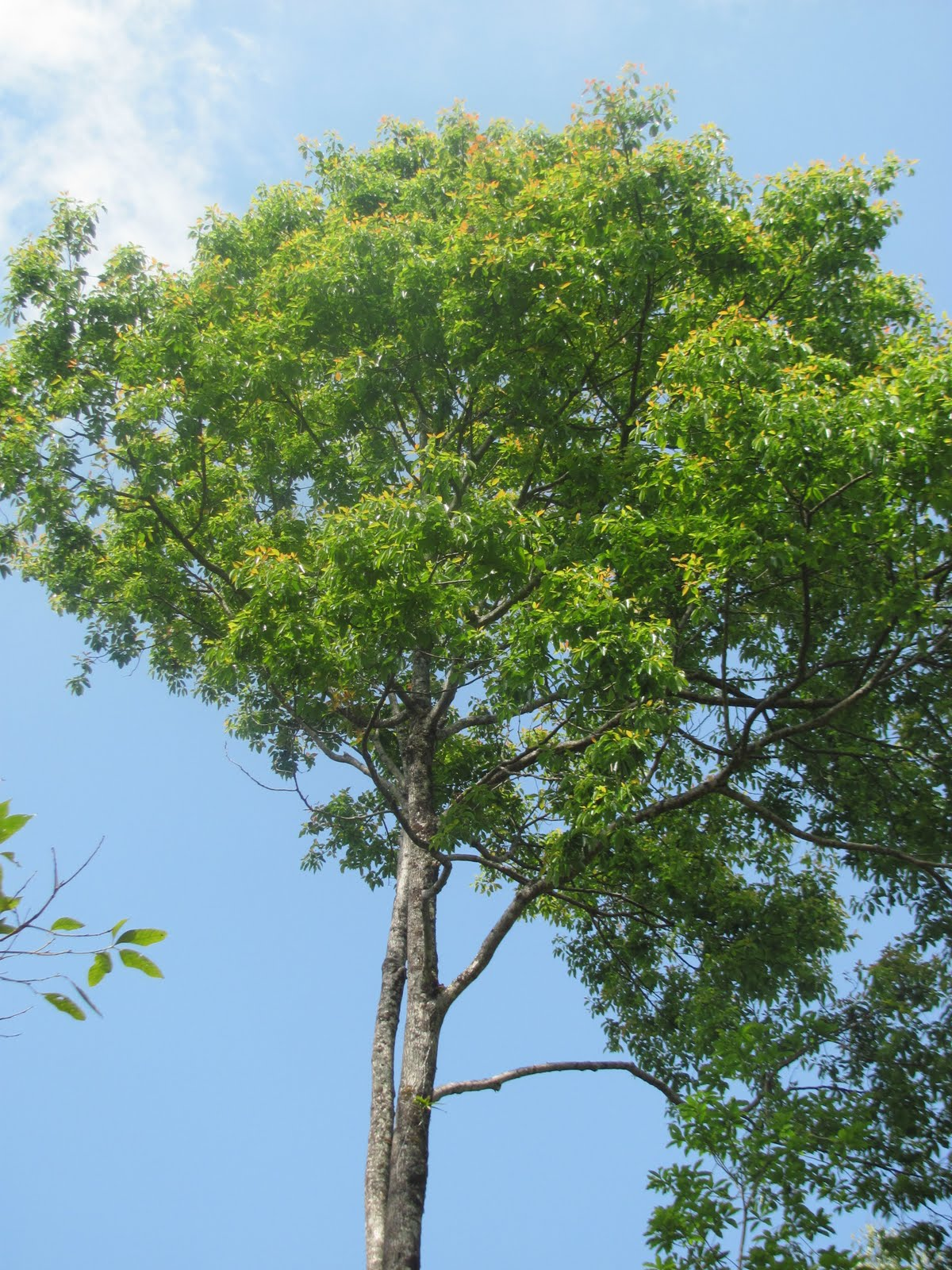Village View: Local trees of Nagaland