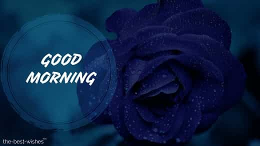good morning with blue rose pic