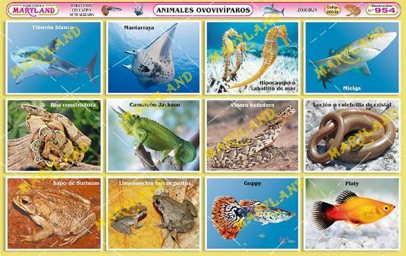 Imagenes Animales Ovovivíparos