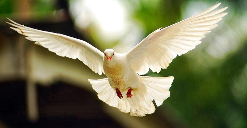 870 Koleksi Contoh Gambar Hewan Aves HD
