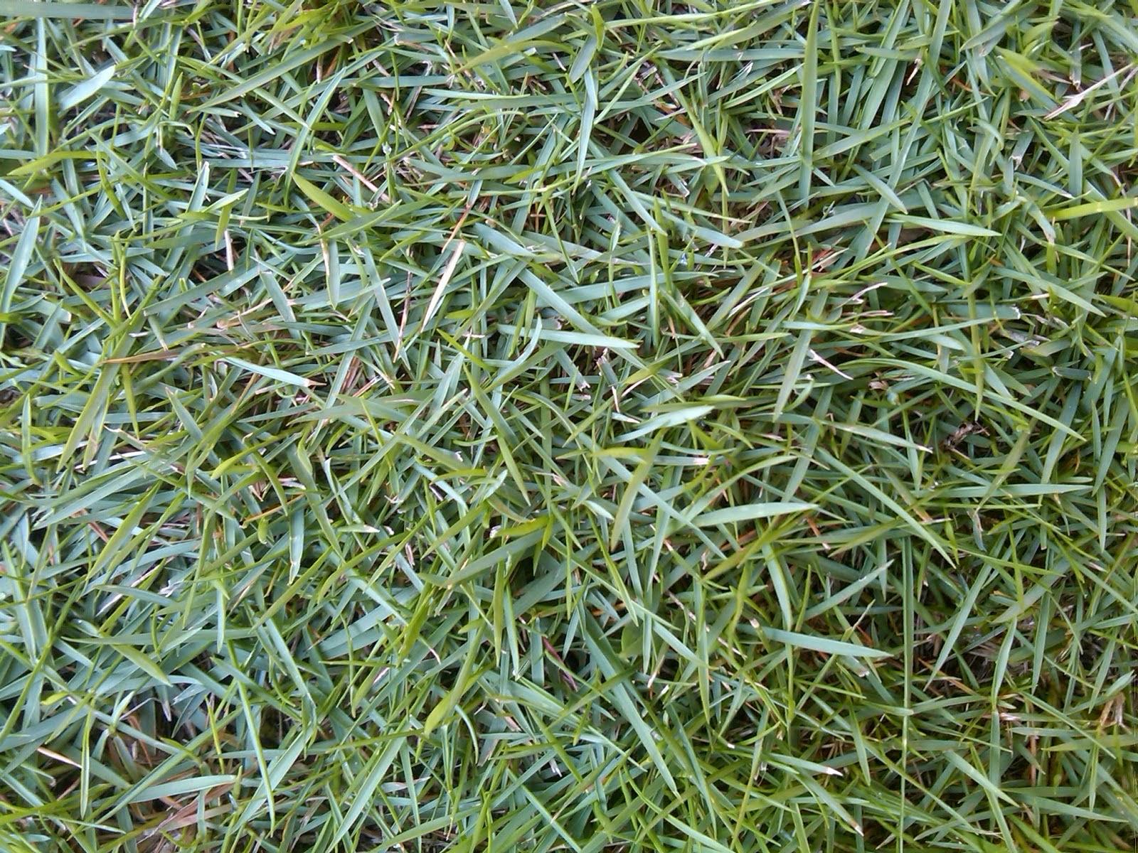 Jual Rumput Swiss | Tukang Rumput Taman | Jasa Pasang Rumput Taman | Jasa Tukang Taman