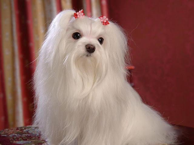 All List Of Different Dogs Breeds: Information on Cute ...