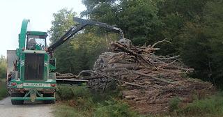 Exploitation du bois dans la foret de Chaux