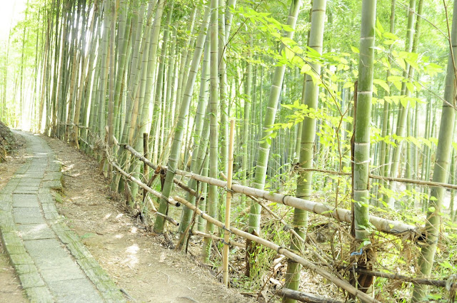 Bamboo Forest at Fushimi Inari