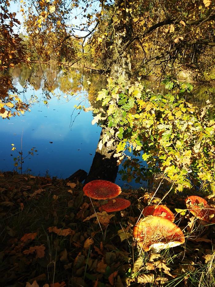 Herbststimmumg am Weiher mit fliegenpilzen