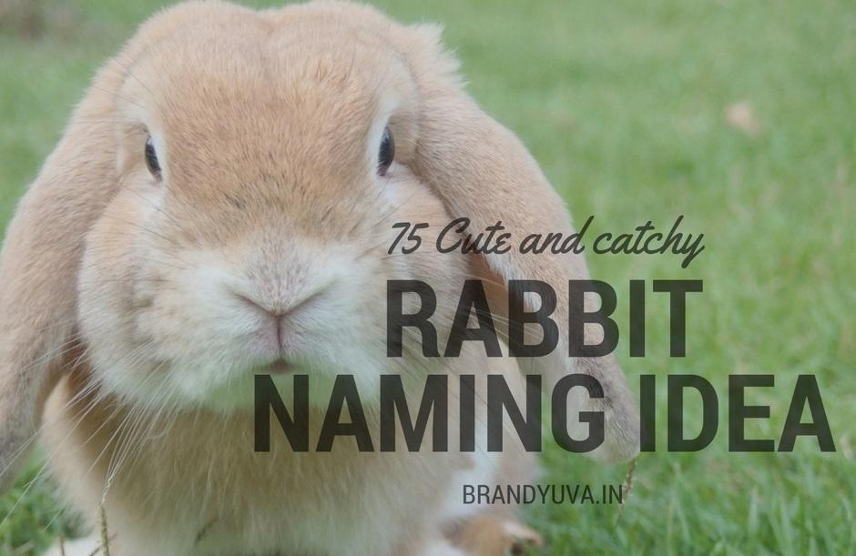 75+ Best, Unique Rabbit Names Idea [Udpated]