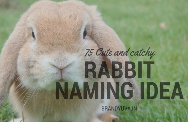 rabbit-names-idea