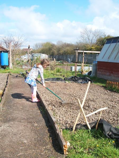 Magoo rakes the soil on our allotment