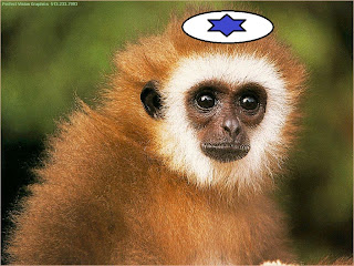 Image result for mossad monkey