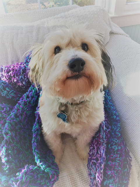 Fluffy dog in colorful crochet afghan