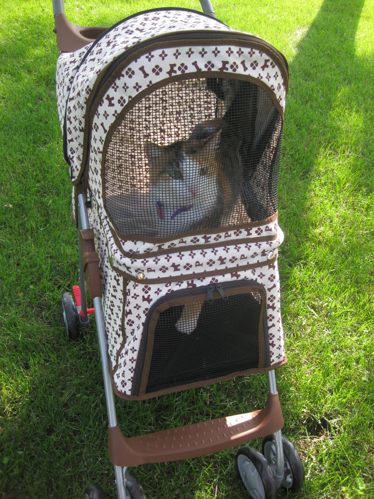 Catsparella: Cats on Wheels: Let's Talk Pet Strollers
