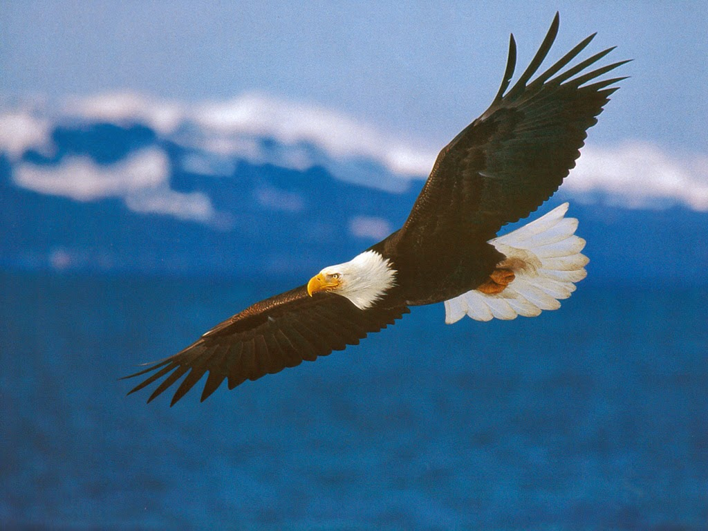 Lovable images cute eagle hd birds images free download bald cute eagle hd birds images free download bald eagle wallpapers free eagle pictures free download eagle flying eagle images birds wallpaper voltagebd Image collections