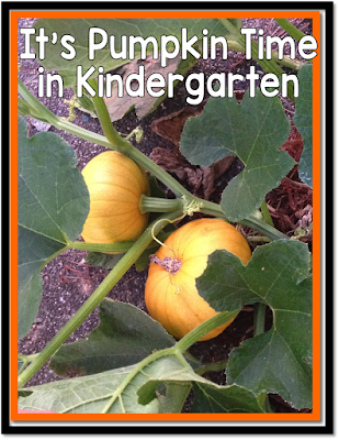 pumpkin math, investigating pumpkins in kindergarten