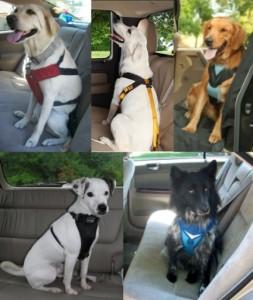 Pet Travel Made Easier