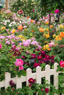 Beautiful Rose Gardening Ideas