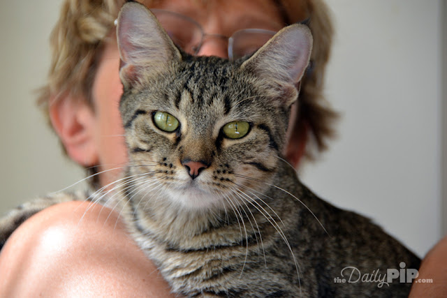 Top reasons to adopt or rescue a cat