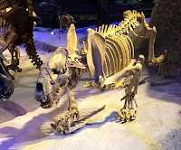 Esqueleto Xenosmilus hodsonae
