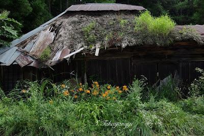 いくぜ、東北。栃木県 茅葺屋根 廃屋 空家