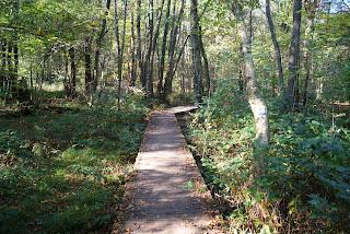 Ein schmaler Holzsteg führt durch den Wald