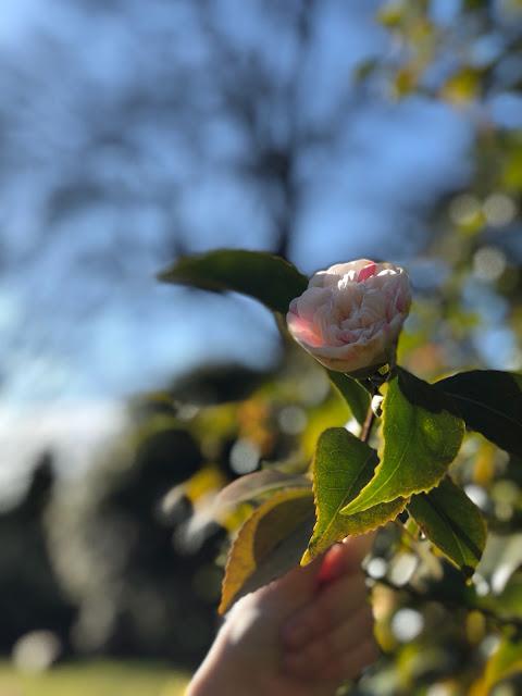 Tilgate Park Crawley 2018 Spring Flowers