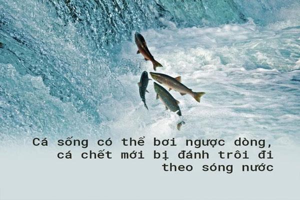 Cá sống bơi ngược dòng