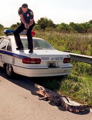 gambar lucu polisi dan buaya